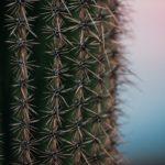 Cactus-macro-photo